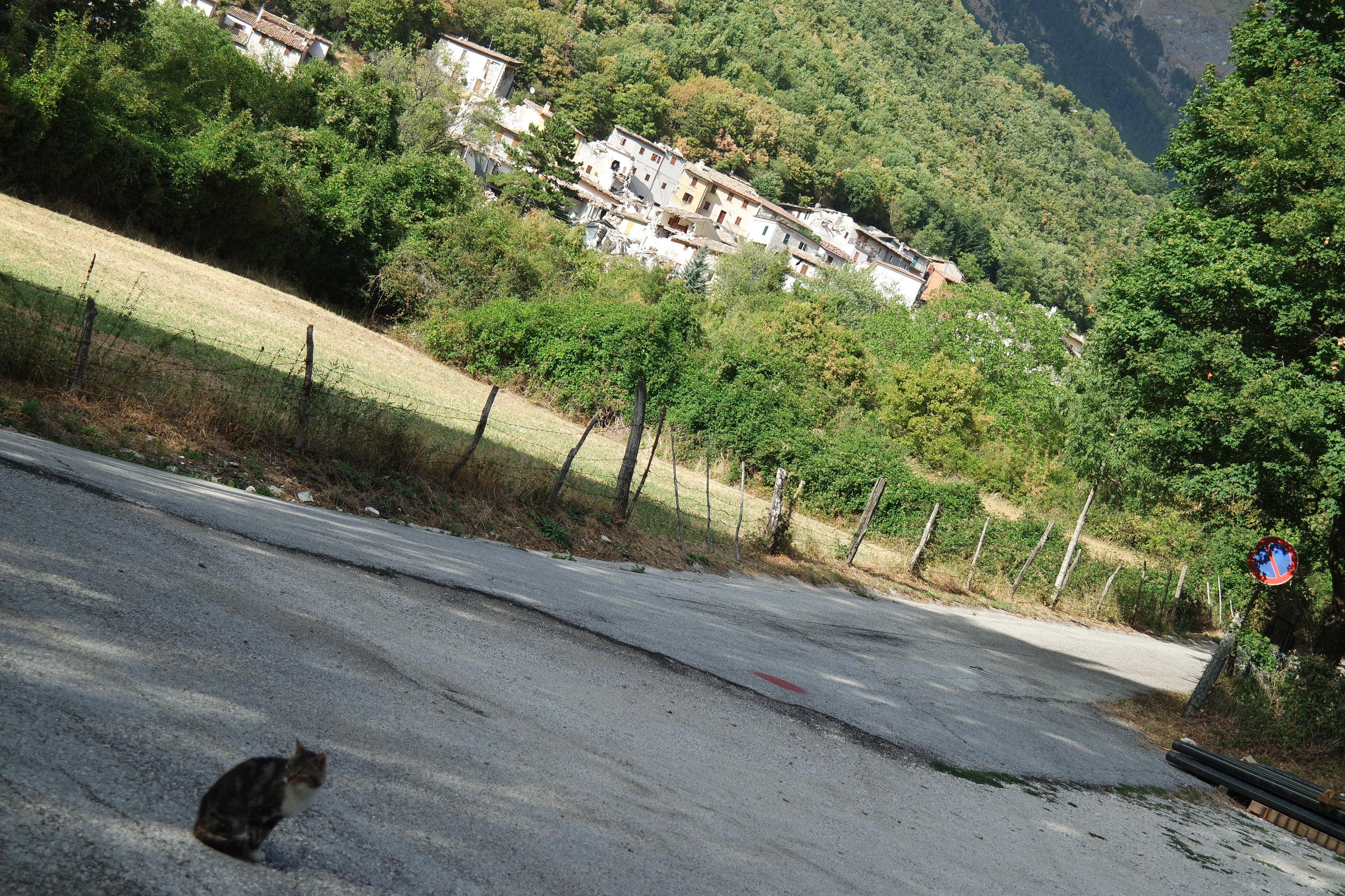 gattino di Vallinfante