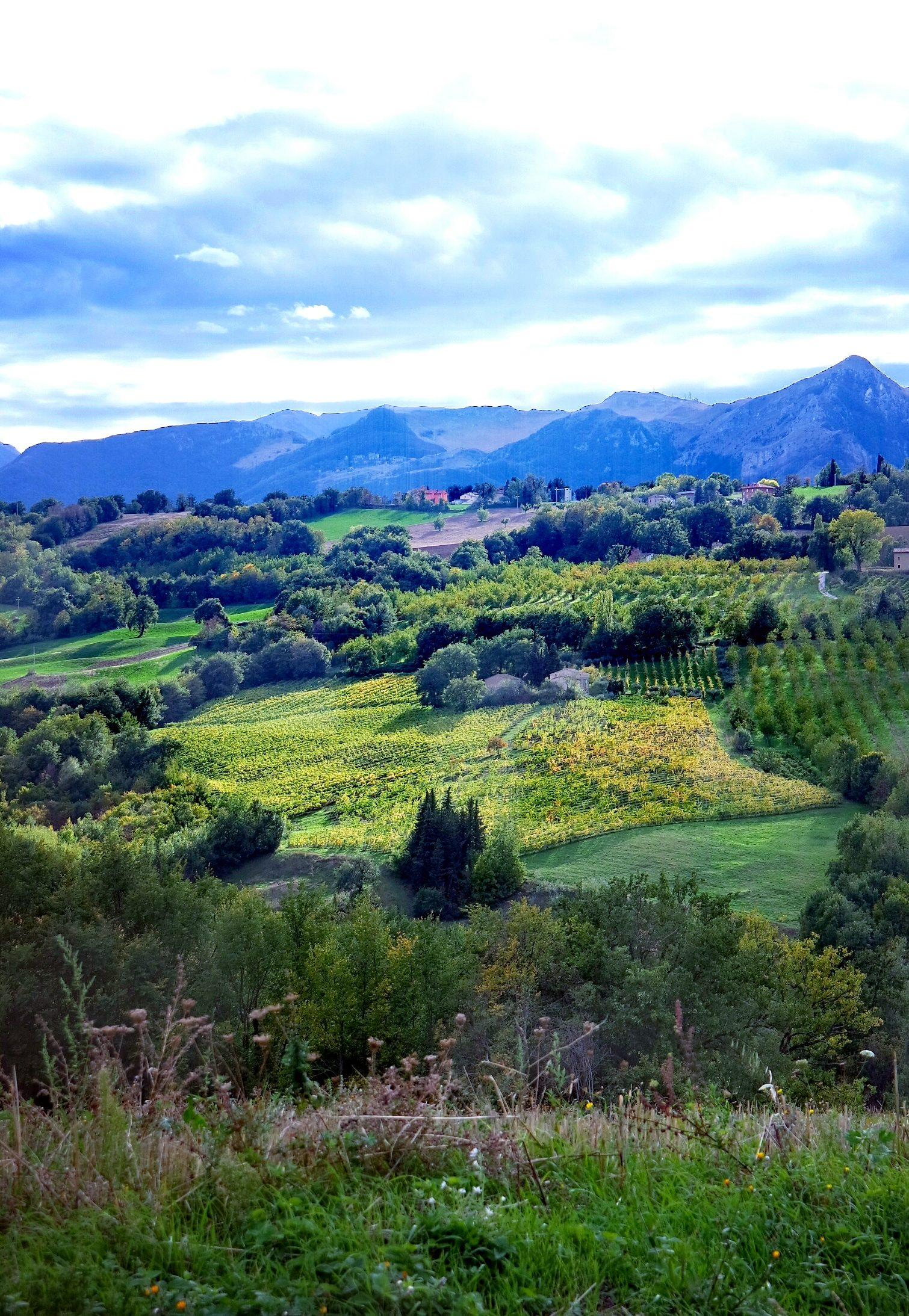 Panorama colline maceratesi vicino a Gualdo di Macerata