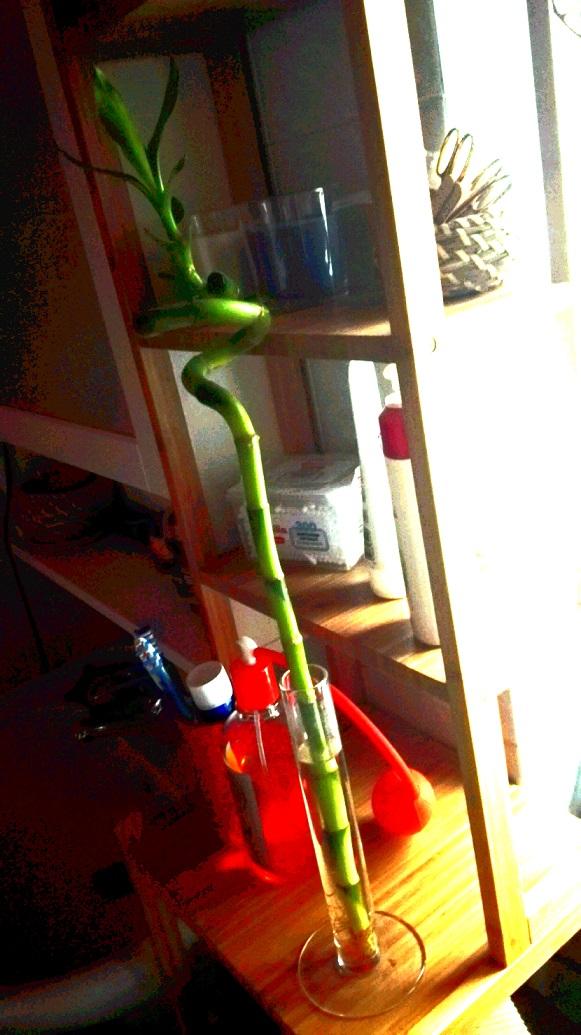 Il mio Bambù nel bagno