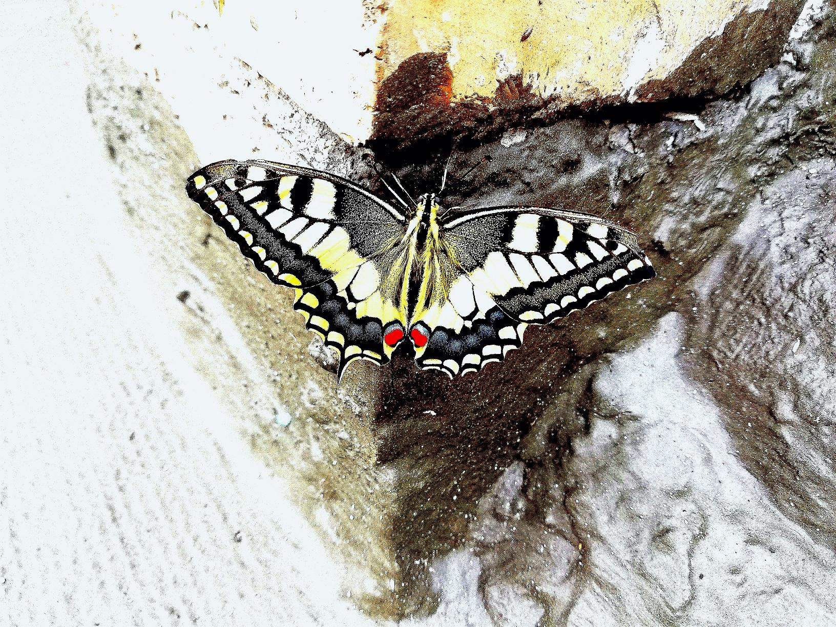 Sogno Coraggio. Eccola la farfalla, mentre dispiega le ali poco prima di volare via.